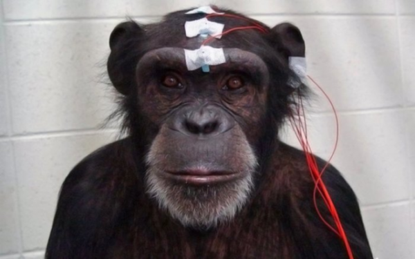 Что такое Neuralink? Разбор