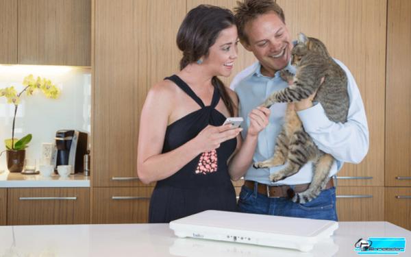Туалет для кошки Tailio – следит за здоровьем животного